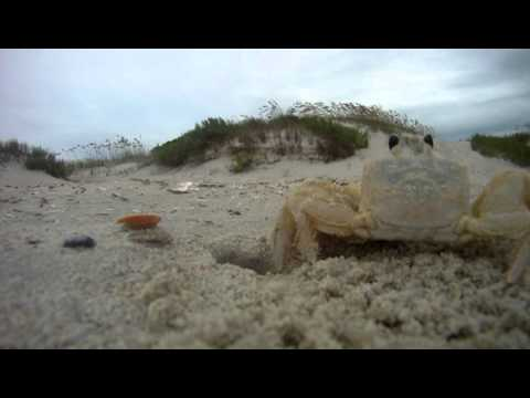 GoPro Meets Ghost Crab