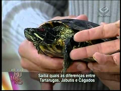 Programa MULHERES,Tartaruga, Cágado ou Jabuti?