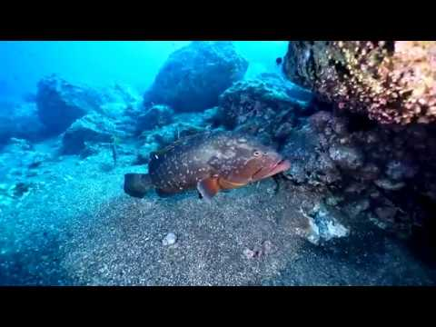 Environment: Monaco Ocean Week 2018