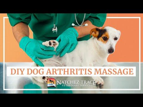 Easy DIY Dog Arthritis Massage at Home - Marc Smith DVM