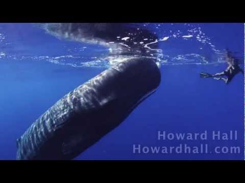 Sperm Whale Encounter Hd