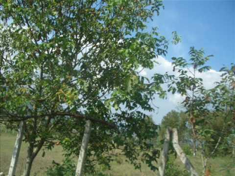 devrek 2009 Yaz Devrek Zonguldak türkiye istanbul pinarönü köyu edirne amasra bartin Basoglu