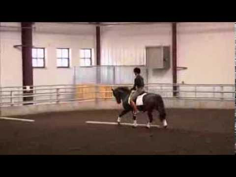 Naked Truth of Riding - DVD 3 - Heather Blitz Rider Biomechanics