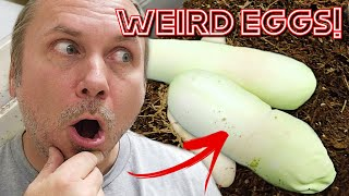 DEFORMED SNAKE EGGS!! WILL THEY LIVE and HATCH?? | BRIAN BARCZYK by Brian Barczyk