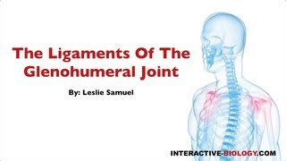 079 The Ligaments Of The Glenohumeral Joint