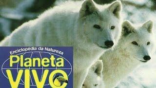 O País do Lobo Branco