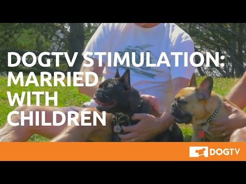 Video DOGTV Stimulation: Married with children download in MP3, 3GP, MP4, WEBM, AVI, FLV January 2017