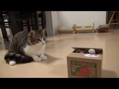 當貓咪遇到同類的玩具時反應太可愛了...!?