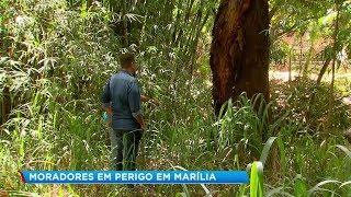 Terrenos abandonados preocupam moradores de Marília