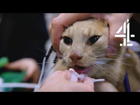 Gato es resucitado durante la grabación de un documental