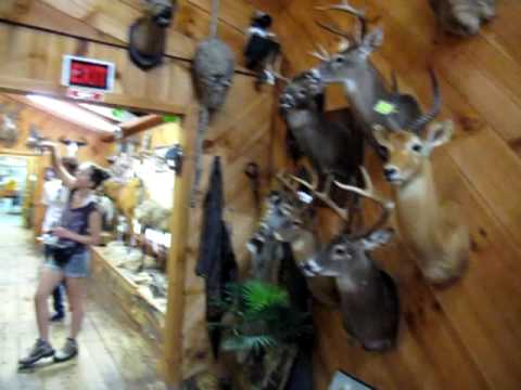 Wilderness Taxidermy & Wildlife Museum Tour