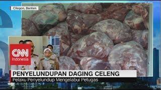 Video 4 Ton Daging Celeng Diselundupkan, Pelaku Terancam Sanksi Pidana MP3, 3GP, MP4, WEBM, AVI, FLV Juli 2018