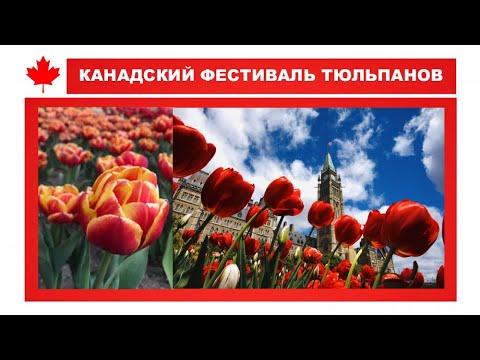 Фестиваль тюльпанов в Оттаве (The Canadian Tulip Festival)