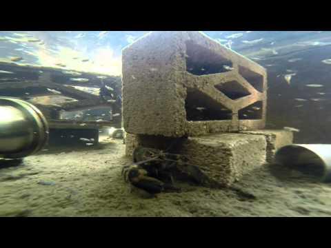 Przydomowa farma homarów