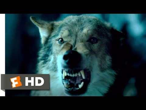 Alpha (2018) - Sabretooth Attack Scene (8/10) | Movieclips