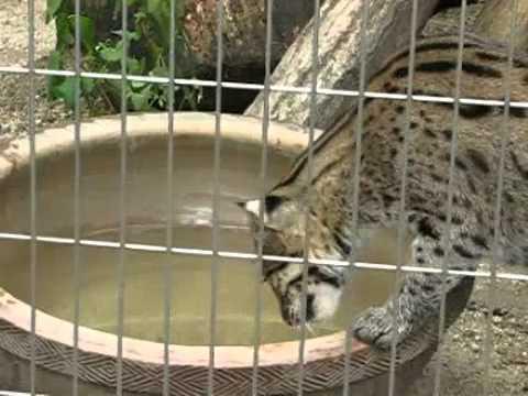【三重県】ついに水族館が猫を展示しはじめた!?