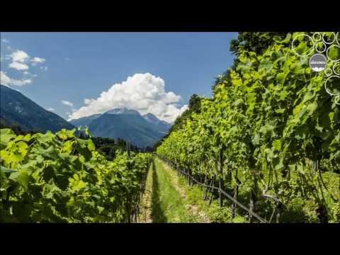 Weinland Südtirol - Vinschgau