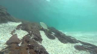 Playa Conchal Costa Rica  City new picture : 28 May, 2015, snorkeling Playa Conchal, Costa Rica