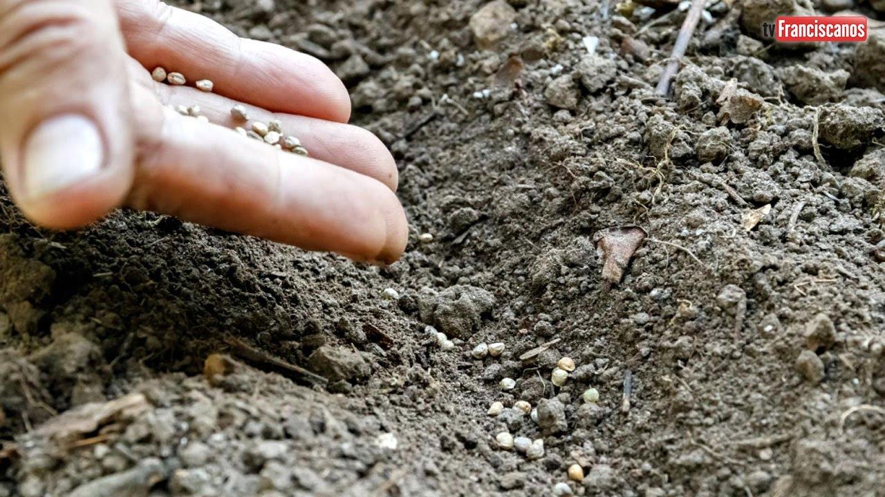 [Palavra da Hora | A semente que cai entre espinhos e a que cai em terra boa]