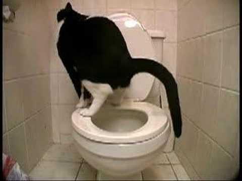 Un chat qui fait Kaka ...