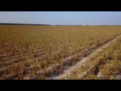 Γερμανία: Αποζημιώσεις στους αγρότες λόγω ξηρασίας