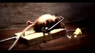 Video Para Llorar De Risa