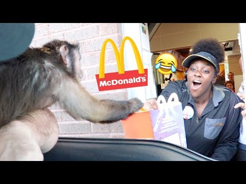 Monkey Visits The McDonalds Drive Thru!