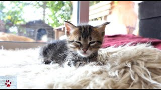The Tiger sleeps tonight | Rescue tale of an orphan kitten by The Orphan Pet