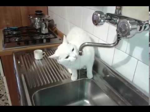 stupendo gatto che beve nel lavandino di casa
