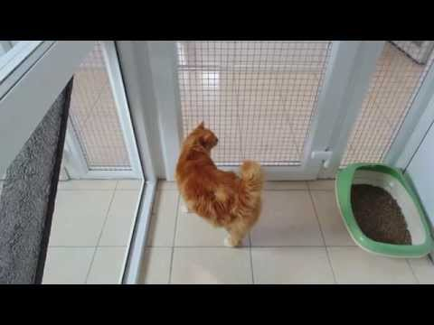 Hedgerows UPVc Cattery by Peticular Pens