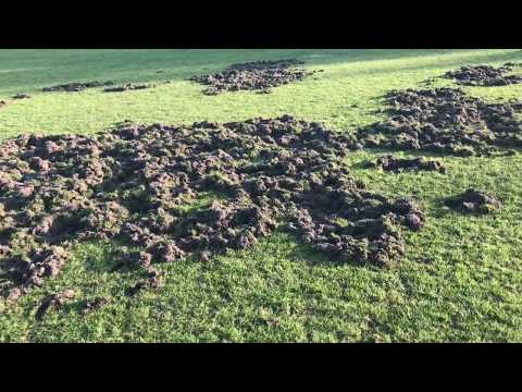 Wideo1: Boisko w Zaborowie zniszczone przez dziki