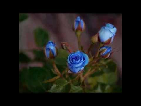 Blå roser til en blond pige - Gustav Winckler med Sven-Olof Walldorfs orkester