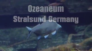 Stralsund Germany  City new picture : Ozeaneum Stralsund★Ocean museum Stralsund Germany