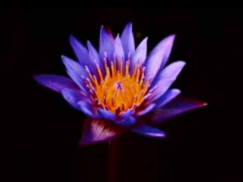 Mooji Audio: What is love?