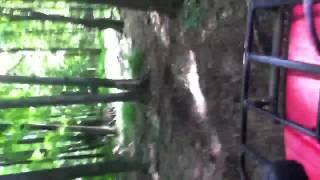 10. Yamaha bear tracker 250 review