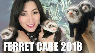 Ferret Care 2018 - How to Care For Pet Ferrets by Emzotic
