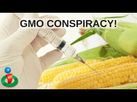 The Conspiracy that Keeps GMOs Mainstream Here