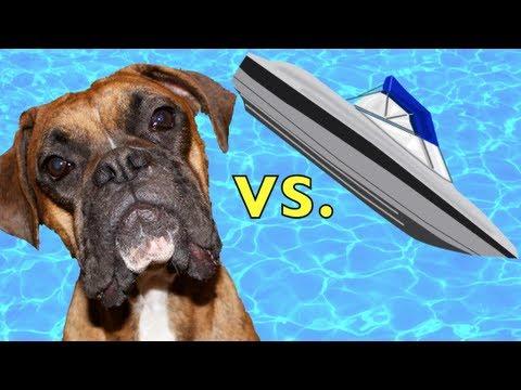 funny boxer vs rc boat!