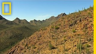Best of Saguaro National Park - National Geographic