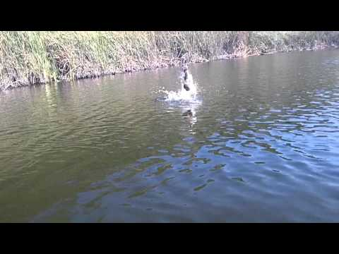Bassin brothers pond fishing #2