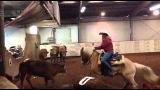 Prova di sbrancamento gennaio 2015 presso MM Horse Pistoia