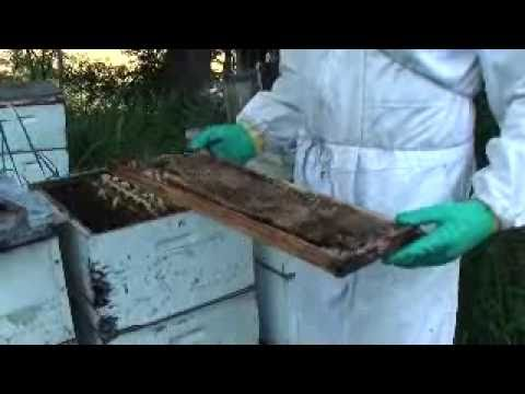 Jeffs' BEES: Field trip #6.Small Hive Beetle Strategy.