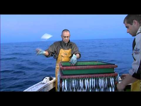 Pêche du merlu à la ligne