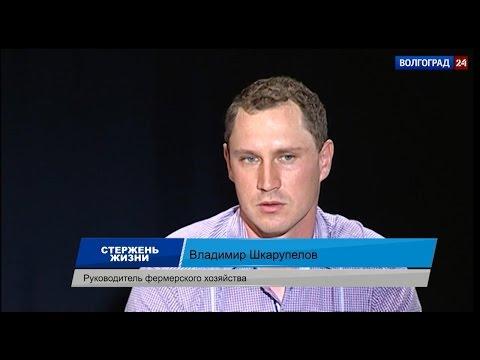 Владимир Шкарупелов, руководитель фермерского хозяйства