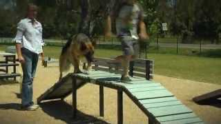 ADVANCE Puppy Care - Dog Parks
