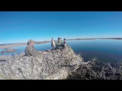 Suisun Marsh Ducks