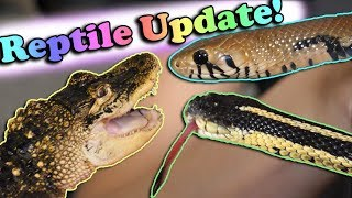 Rescue Animal Update! by Snake Discovery