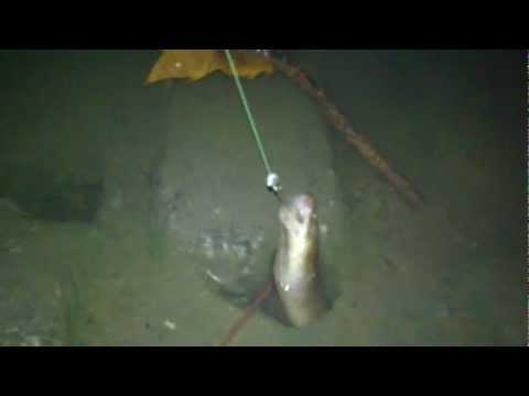 pesca de anguila de noche
