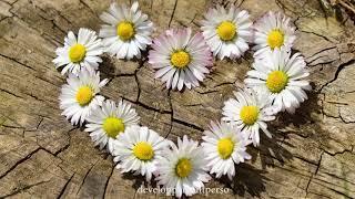 Affirmations Positives S'aimer et S'accepter