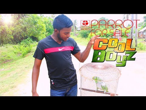 Parrot For Sale - CoolBoyzTV - :::Caribbean Funny Video:::